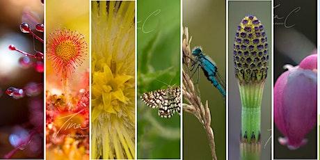Tina Claffey Wetland Macro Photography Webinar tickets