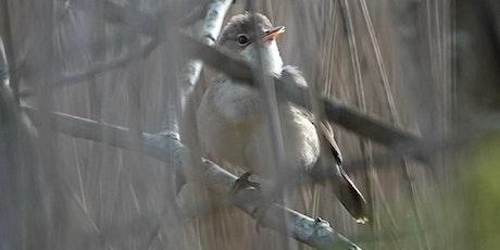 Better Birding Guided Walk tickets