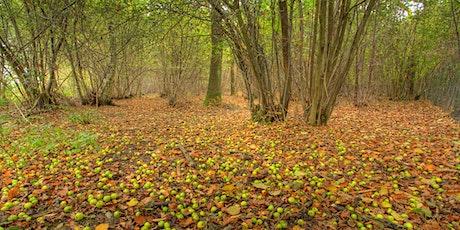 Autumn colour photography (EWC2806) tickets