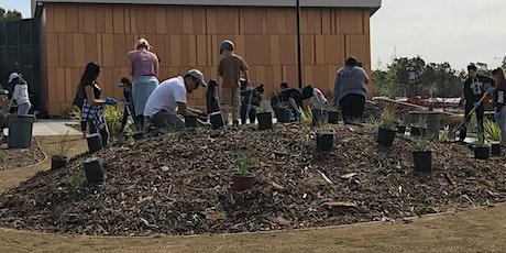 Native Garden Maintenance: Spring and Summer Tasks tickets