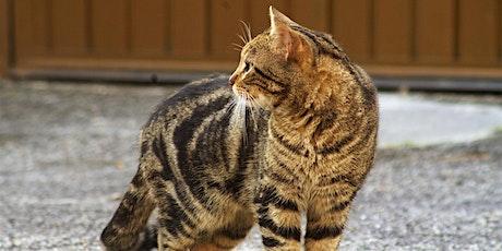 Adult Webinar: TNRM  w/ The Community Cats Podcast tickets