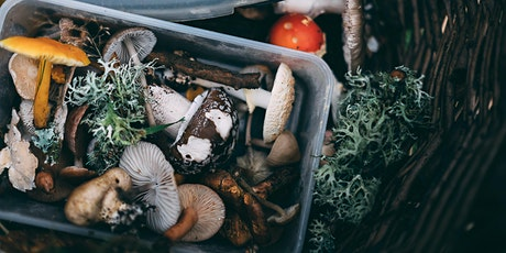 Broomhill Estate - Foraging  for beginners (Half day - including lunch) tickets