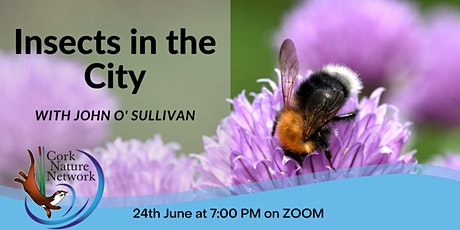 Insects in the City tickets