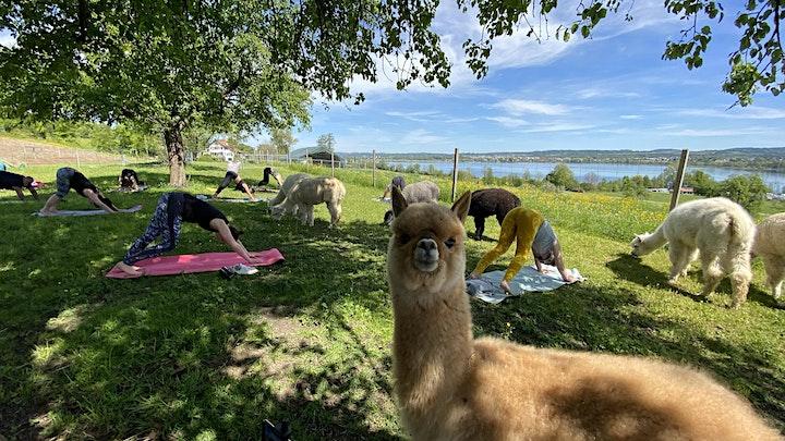 Yin Yoga  Klangreise inmitten Alpakas Zürich: Bild