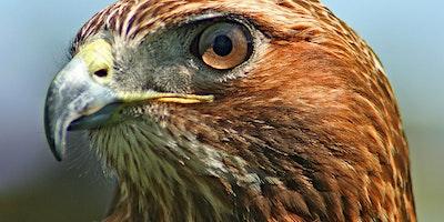Tenafly Nature Center: Remarkable Raptors, grades