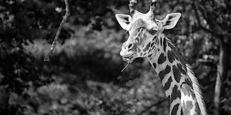 Hunt's Photo Walk: Roger Williams Park Zoo tickets