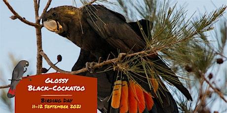Glossy Black-Cockatoo ID workshop tickets