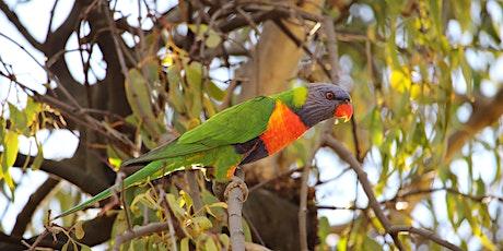 Birding for beginners - Kingfisher Wetlands tickets