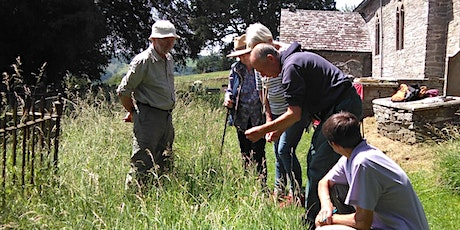 Identify & Record Wildflowers and Plants - Caynham tickets