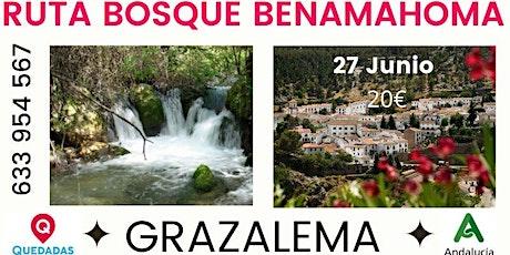RUTA BOSQUE BENAMAHOMA + GRAZALEMA entradas