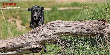 Canon Fotokurs bei Foto Leistenschneider - Der bewegte Hund Tickets