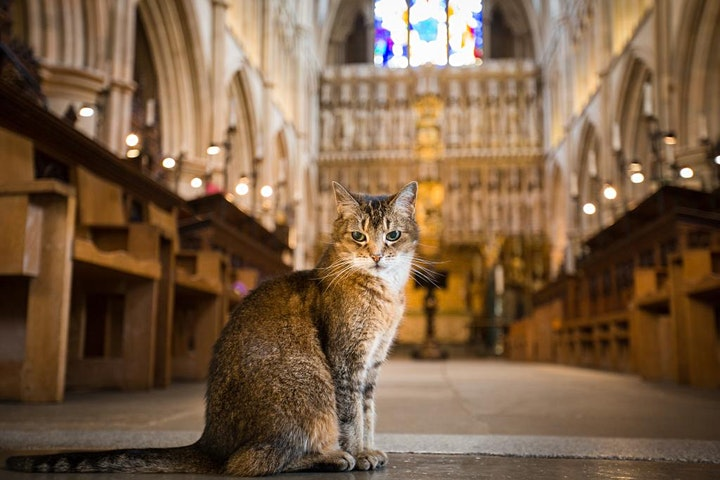 Doorkins Magnificat and Hodge - An Online Talk by image