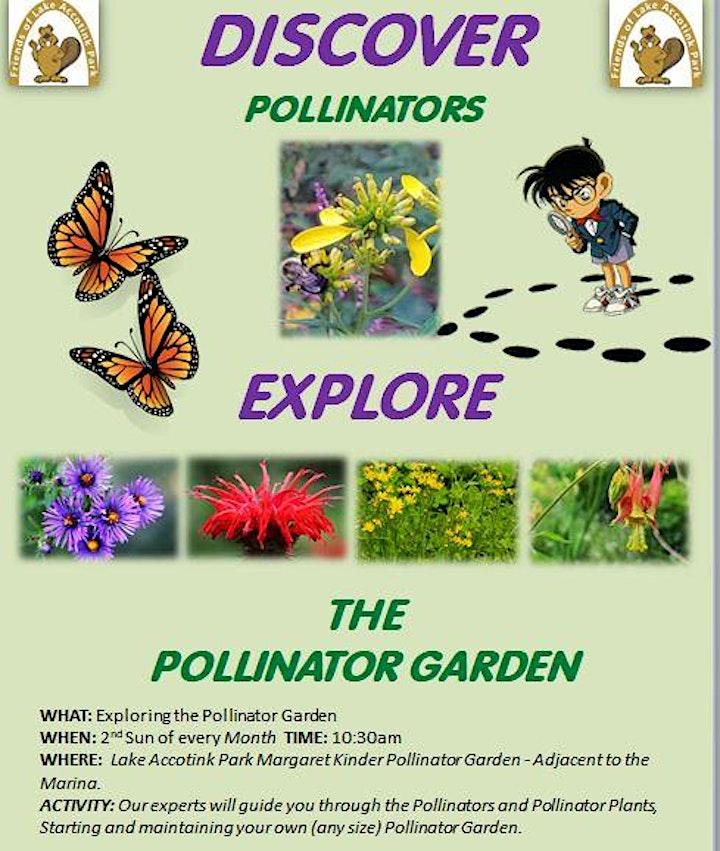 Exploring the Pollinator Garden at Lake Accotink Park image