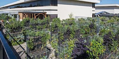 Visite de notre ferme urbaine Peas&Love@Parly2