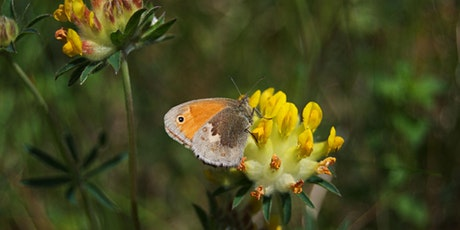 Guided butterfly and wildflower walk through Downe tickets