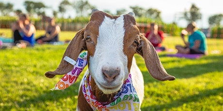 Tolino Winery Goat Yoga & Wine tickets