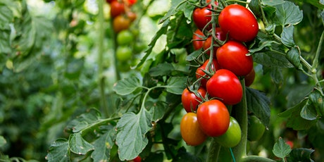 Tomatoes: Pruning, Trellising, & More tickets