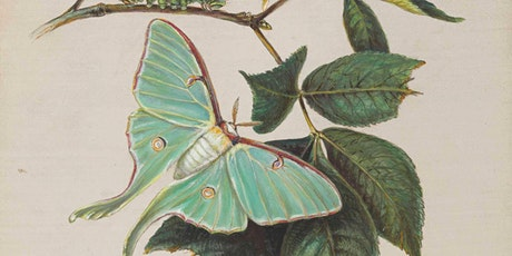Children's Summer Storytime: Exploring Botanical Art in the Museum tickets