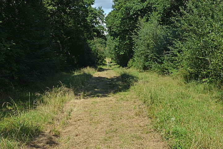 Guided butterfly walk at Bricket Wood Common image