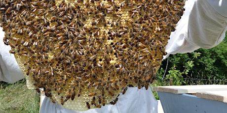 Beginners Beekeeping Group 3 tickets