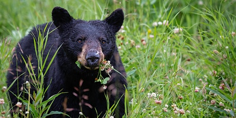 Living with Black Bears in New York State (virtual) tickets