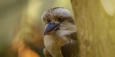 Bird Feeder Workshop for Kids at Tweed Regional Museum tickets