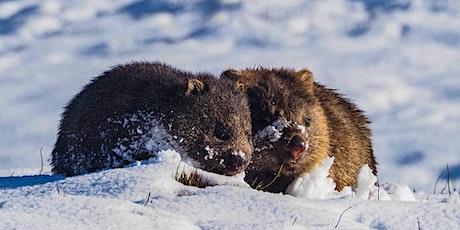 Lane Cove Bush Kids - Winter Wombats tickets