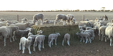 Benefits of Precision Lambing tickets
