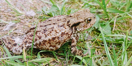 Amphibian and Reptile Ecology Course (DLL) tickets