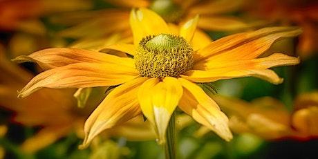 Photographier les fleurs autrement billets