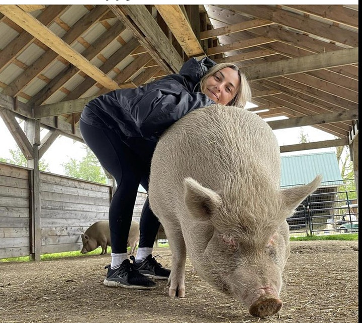 Yoga with pigs and turkeys image