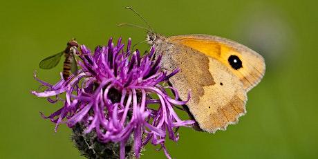 Woodhouse's Butterflies tickets