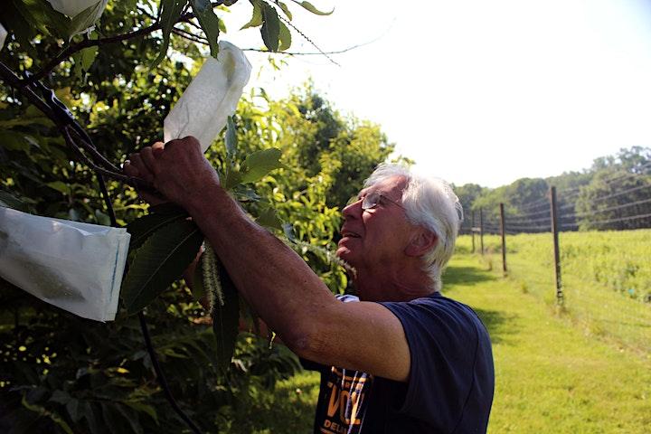 American Chestnut Pollination Workshop image
