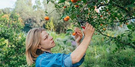 Citrus 101 Workshop Series at Arlington Garden tickets