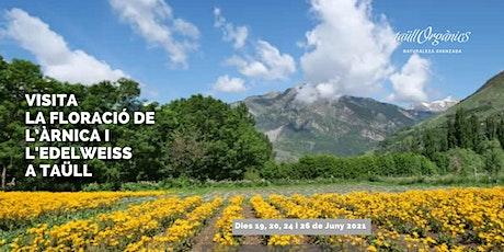 Vols venir a veure la floració de l'àrnica i l'edelweiss a Taüll? entradas