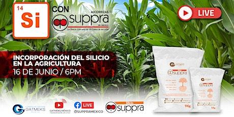 Si con Suppra, incorporación del silicio en la agricultura boletos