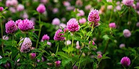 Seed Webinar Series: Legumes | Semences & variétés adaptées : Légumineuses tickets