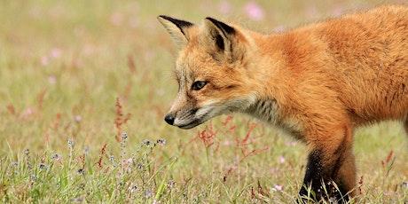 Northwest Wildlife's Annual General Meeting tickets