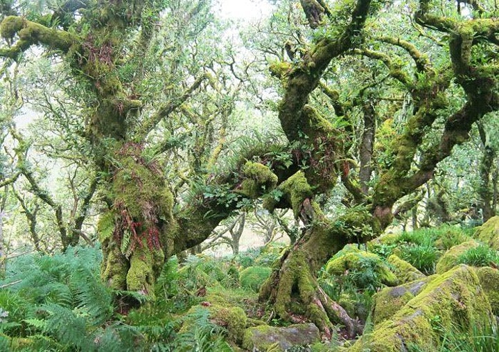 Launch event for 'A Spell in the Forest' by Roselle Angwin image