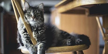 Drawing Club : Fundamentals / Cat Portrait tickets
