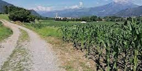 """Incontriamocisulserio - Visita esperienziale Azienda Agricola """"Ca' di Lene"""" biglietti"""