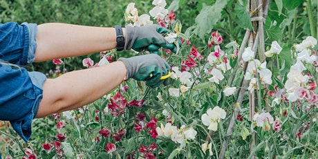 Bloom Sheffield X Chatsworth Gardeners Open Day tickets