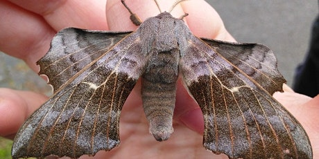 Montrose Moth Night tickets