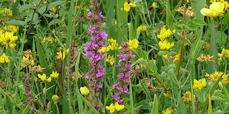 Summer Wildflower Walk tickets