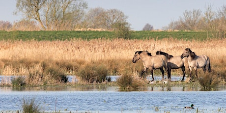 Timed entry to Wicken Fen National Nature Reserve (21 June - 27 June) tickets