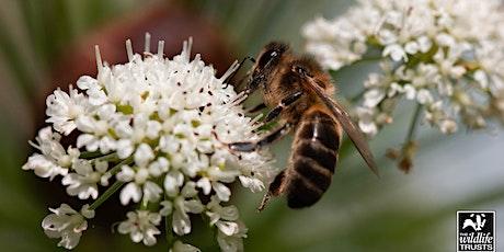 Bee walk in Philips Park (Bury) tickets