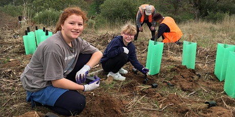 Free the Trees:  School holidays planting event Wednesday 14th July tickets