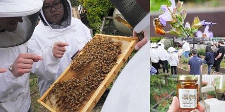 Urban Beekeeper 101: Honey Tasting to Hive Inspection with Beekeeping Suit tickets
