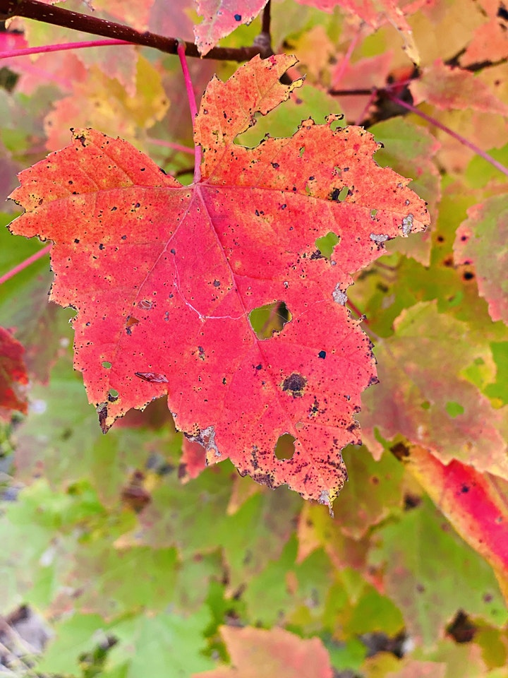 Canadian Fall Colours Virtual Nature-Immersion Retreat image