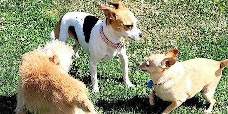 Learn & Play Small Dog Social 8/7/21 tickets